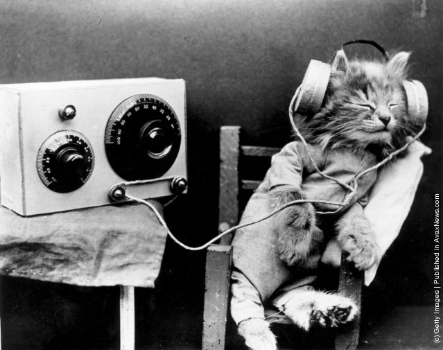 Interesting Old Photos of Cats